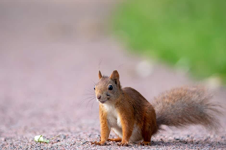 squirrel on the ground that can cause roof damage