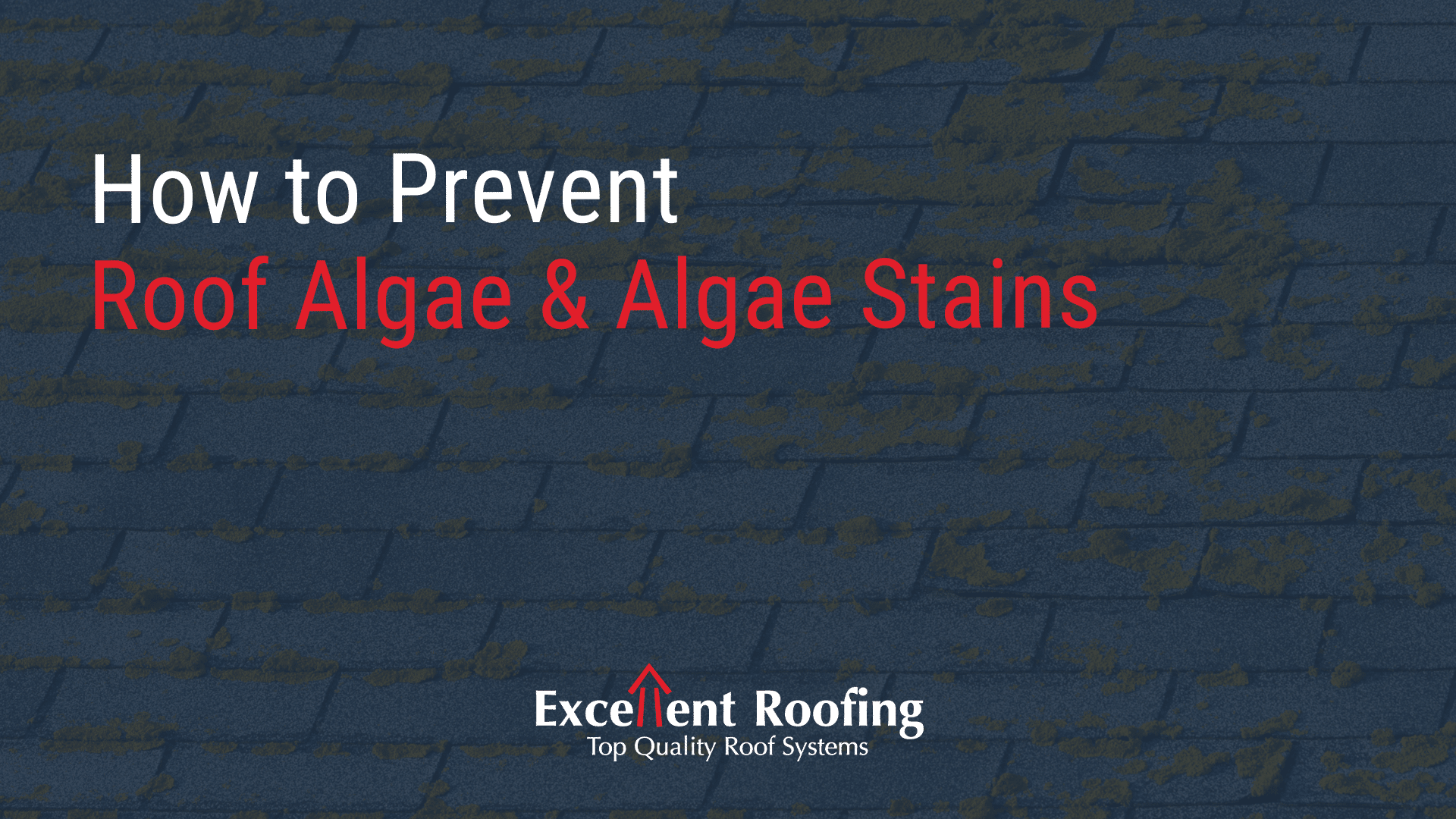 How To Prevent Roof Algae And Algae Stains Excellent Roofing